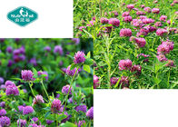 Organic Dietary Red Clover Extract , Trifolium Pratense Extract For Menopause Support